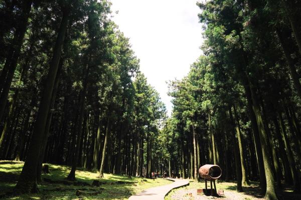 절물자연휴양림 입구의 삼나무숲 나무데크 산책길. 정상부까지 바로 올라가는 800m의 짧은 등산로, 오름 주변을 도는 3㎞ 길이의 나무데크 '너나들이길', 총 거리가 11㎞를 넘는 '장생의 숲길' 등 3가지 코스가 있다.