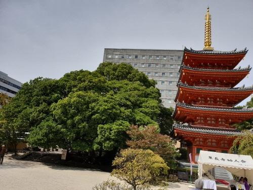 일본 후쿠오카시 기온역 인근 도초지(東長寺)의 붉은 5층 석탑과 오래된 나무