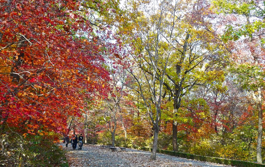 포천국립수목원(광릉숲)의 만추